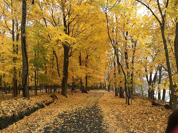 Richard Bryce and Family - Autumn Trail Rockland Lake NY
