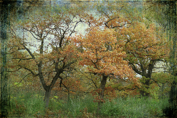 Scott Kingery - Autumn Trio