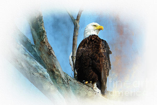 Regina Geoghan - Bald Eagle Majesty