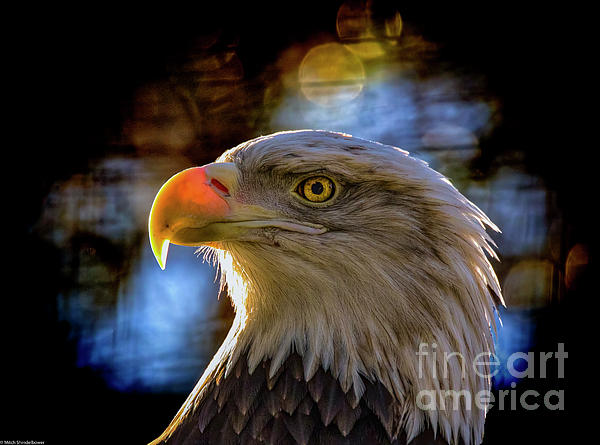 Mitch Shindelbower - Bald Eagle Profile
