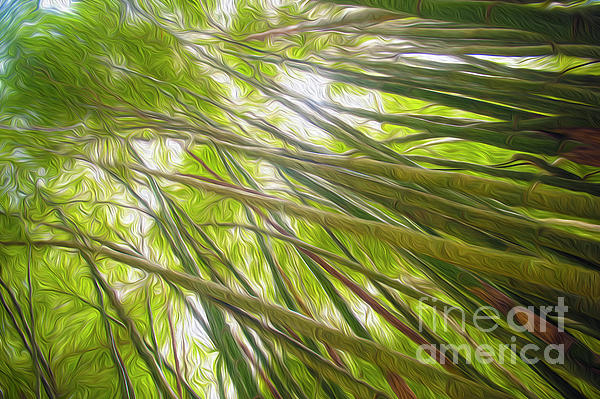 Richard Wareham - Bamboo forest
