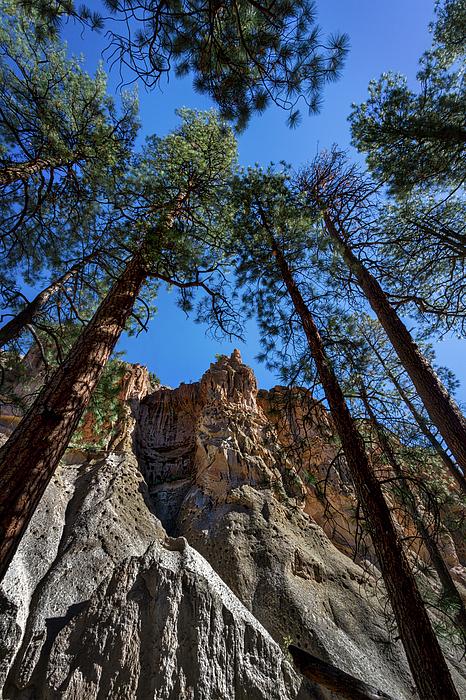 Stuart Litoff - Bandelier Cliffs and Trees