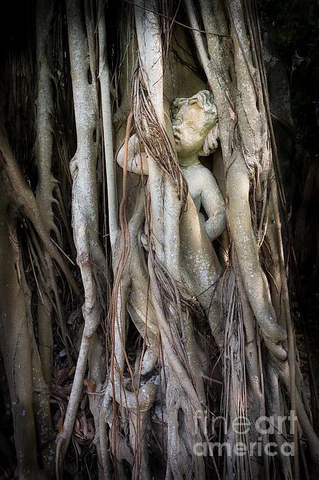 Liesl Walsh - Banyan Grows Over Statue