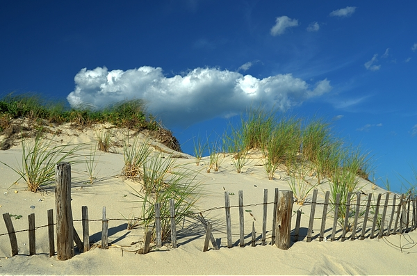 Bob Cuthbert - Beach Dune, Lavallette, NJ