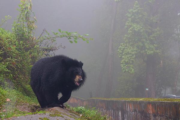 Nilu Mishra - Bear