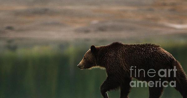 Andrea Larsen - Bear Reflections