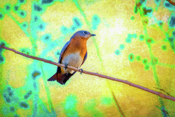 Beautiful Bluebird Chords Flutesonline Llc Song Books For