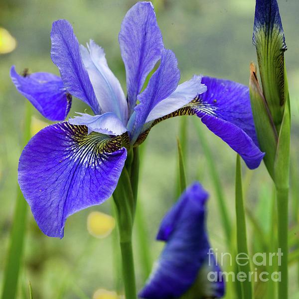 Liz Alderdice - Beautiful Blues