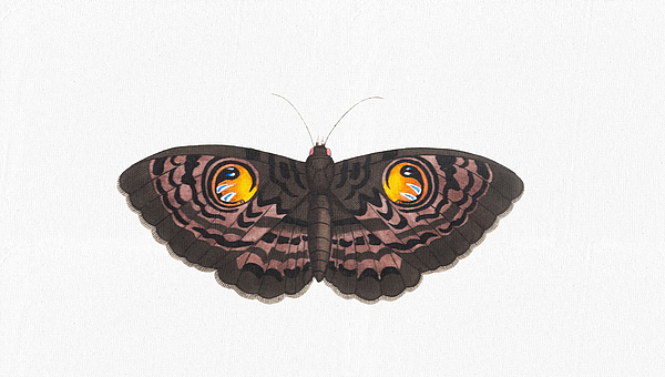 Wall Art Prints - Beautiful Butterfly Art - Colorful Ox-Eye Moth Butterfly