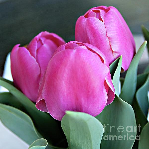 Sherry Hallemeier - Beautiful Pink Lipstick