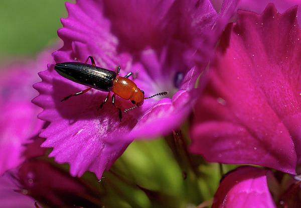 Linda Howes - Beautiful Tiny Bug