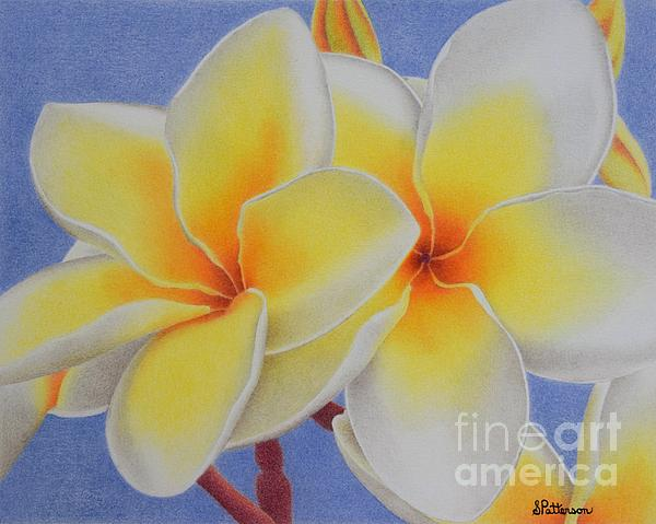 Sharon Patterson - Beautiful White Plumeria