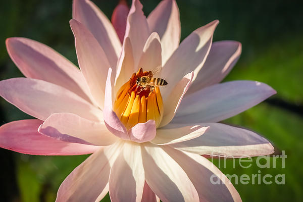 Liesl Walsh - Bee Goodness