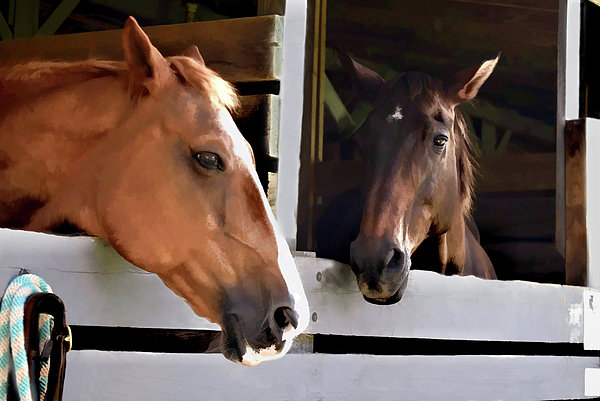 Sandi OReilly - Best Friends Horse Chat