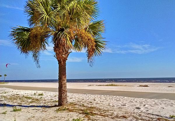 Marian Bell - Biloxi Beach Palm Tree