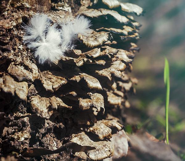 Gennadii Komissarov - Bird feather on a stump with mushrooms.Image is created by natur