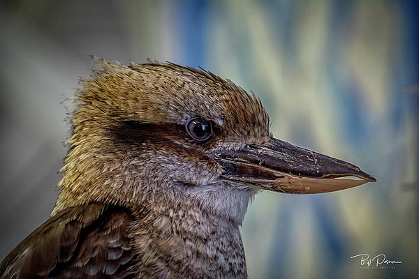 Bill Posner - Bird Portrait