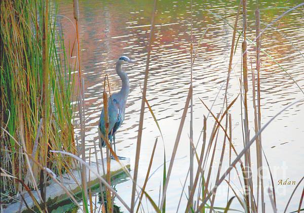 Felipe Adan Lerma - Birds and Fun at Butler Park Austin - Birds 4