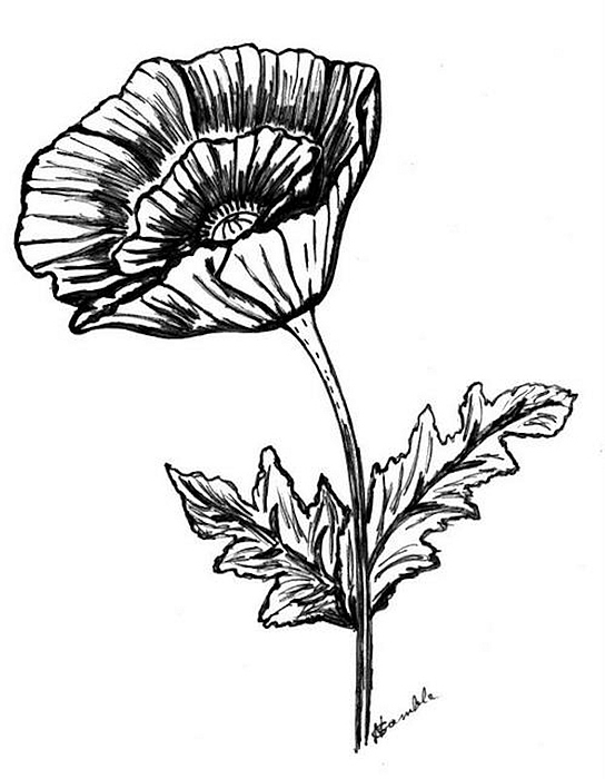 Black And White Poppy Greeting Card For Sale By Nancy Rucker