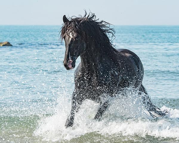 Wade Aiken - Black Stallion #3