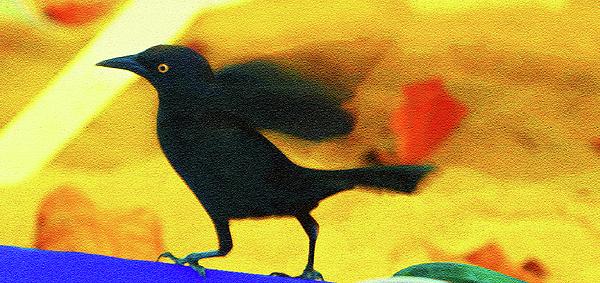 Madeline Ellis - Blackbird