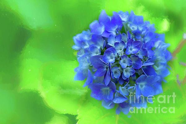 Kay Brewer - Blue Hydrangea Glow