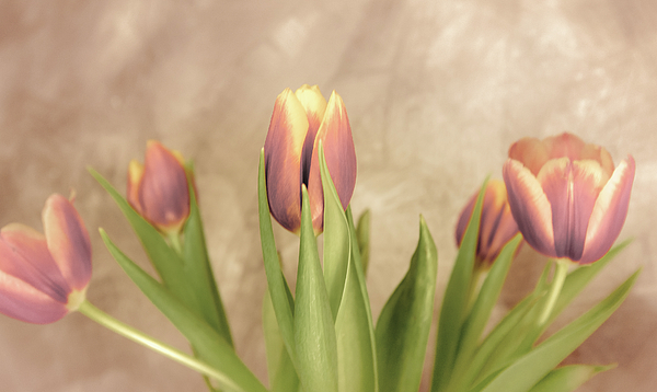 Anna Matveeva - Bouquet of pink tulips 1