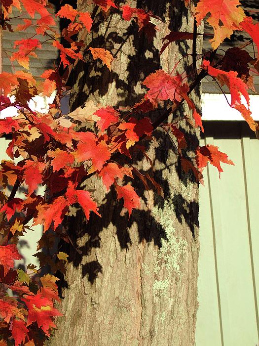 Susan Lafleur - Bright Leaves, Deep Shadows