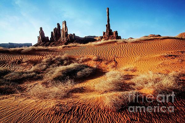 Scott Kemper - Brush on Dunes