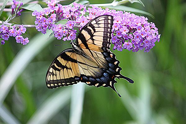 Robert Sander - Butterfly 3