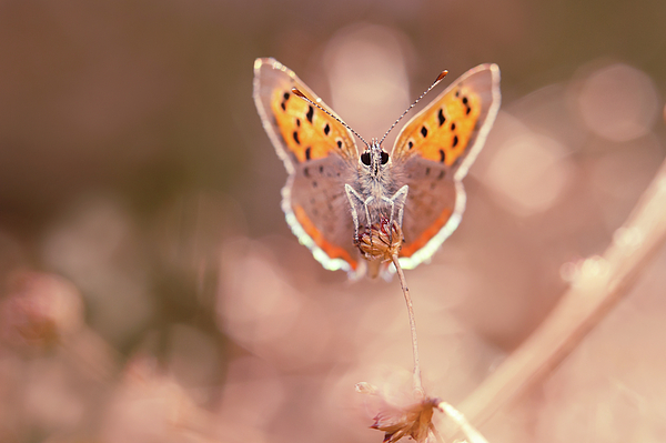 Roeselien Raimond - Butterfly Beauty