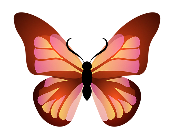 Butterfly Graphic Pink And Orange Shower Curtain For Sale