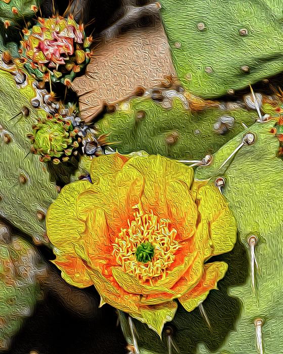 Cactus Flower Op46 Photograph