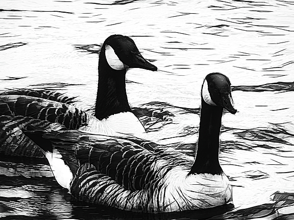 Arlane Crump - Canadian Geese - B and W