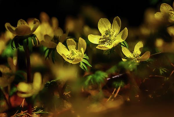 Wes Iversen - Capture The Light