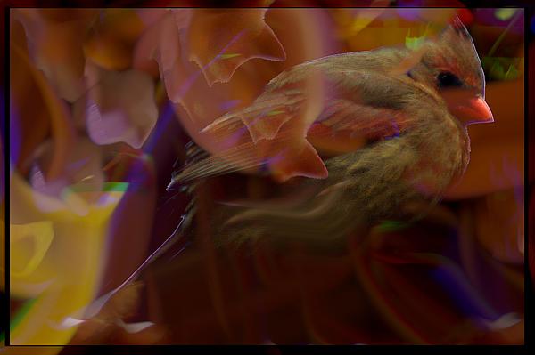 Cardinal And Abstract Digital Art