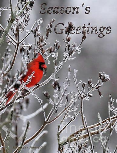 Sandra Huston - Red Cardinal Season