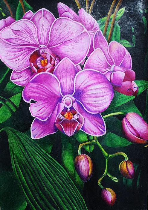 Bruce Bley - Cascading Orchids