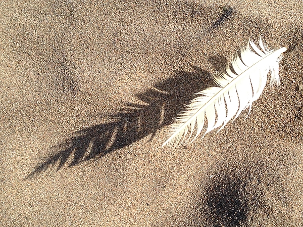 Sylvie Marie - Wispy - Feather in Sand