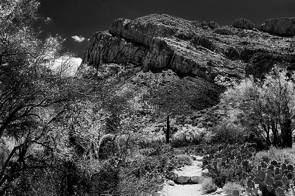 Catalina Spring No48 Photograph