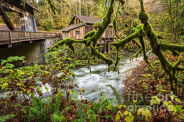 Jamie Pham - Cedar Creek Mill Mosses