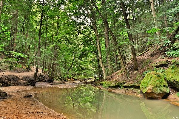 Lisa Wooten - Cedar Falls At Hocking Hill Hiking Trail