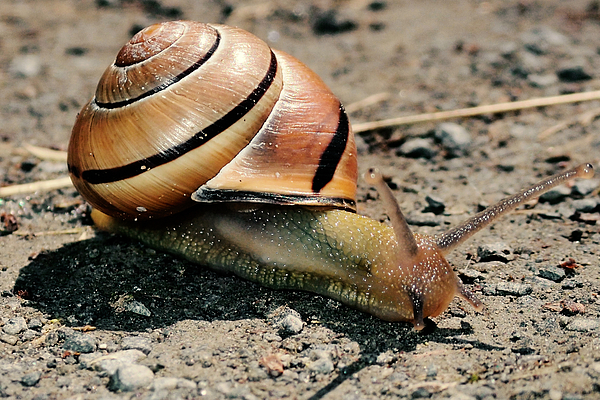 Asbed Iskedjian - Close encounter with the snail