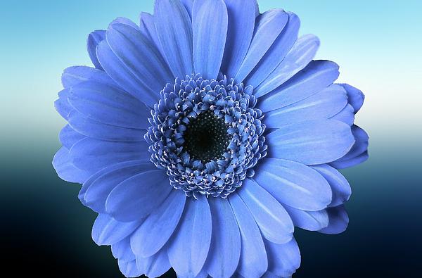 Johanna Hurmerinta - Colorful Flower Art 2