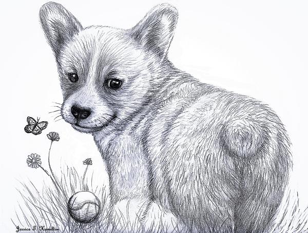 Jessica T Hamilton - Corgi Pupper - Pencil drawing