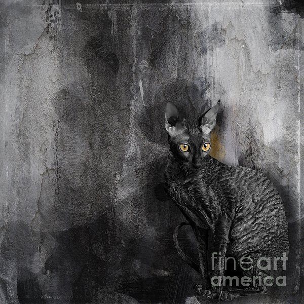 Cornish Rex No 05 Digital Art