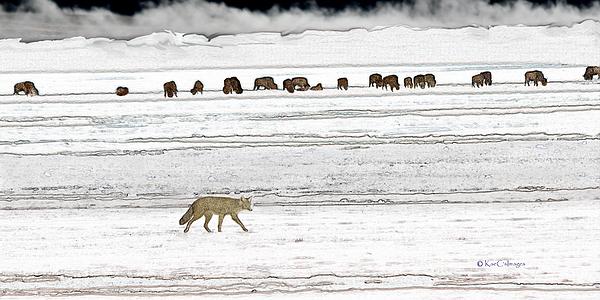 Kae Cheatham - Coyote and Bison
