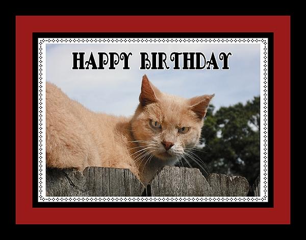 Elaine Ferrell - Cranky Cat Birthday card