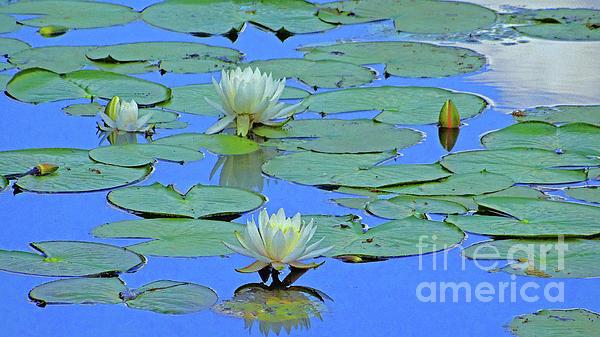 Eunice Warfel - Crystal Lake Water Lilies