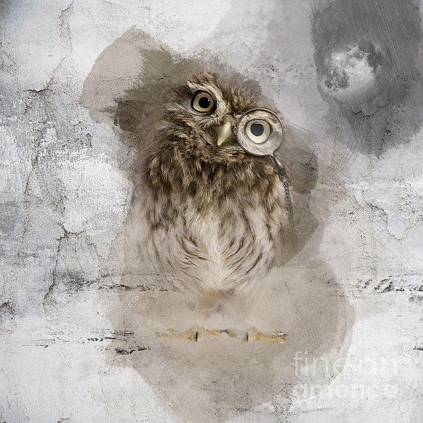iMia dEsigN - Cute Little Owl No 01